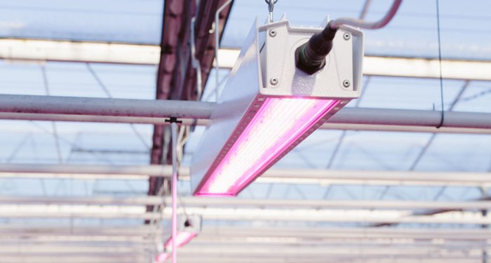Having an integrated driver, like on the HortiLED Top 2.0, will help increase light and maintenance efficiencies