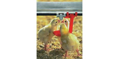 Nipple Drinking Systems for Broilers
