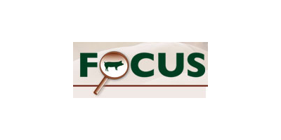 PigFocus Ltd.