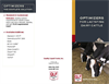 Optimizer for Lactating Dairy Cattle Brochure
