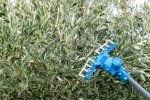 Atrax - Model 4 – A - Electric Olive Harvesters