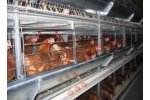 Facco - Model C3 - Poultry Layer House Systems