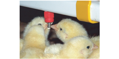 OptiGROW - Broilers Nipple Drinking System