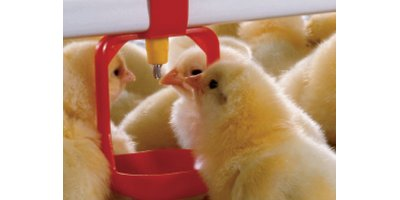 Lubing - Breeder Pullet Drinking Systems