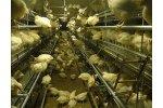 Aviary Rearing Systems