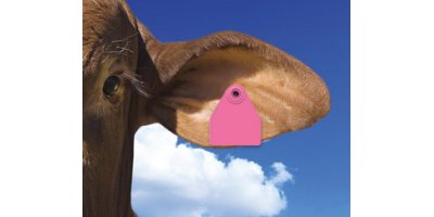 Allflex - Global Medium Female Cattle Tag