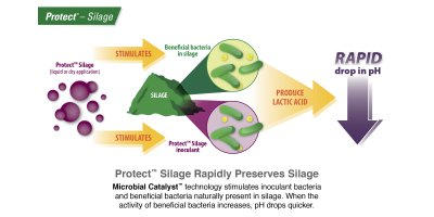 Model Silage - Protect Silage