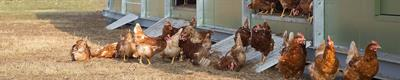 NATURA - Model Camp II - Mobile Housing System for Poultry
