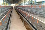 SuperDoubleDeck & SuperTripleDeck - Expandable Management Systems for Laying Hens