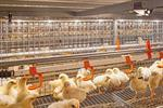 Flexible Tube Lamp - Poultry Production
