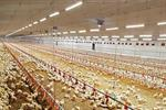 LED Tube Lamp - Poultry Production