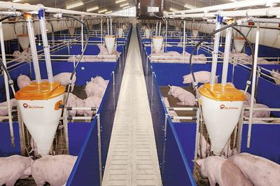 Housing Equipment for Modern Piglet Rearing and Finishing