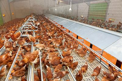 Big Dutchman - Plastic Slats - Poultry Production