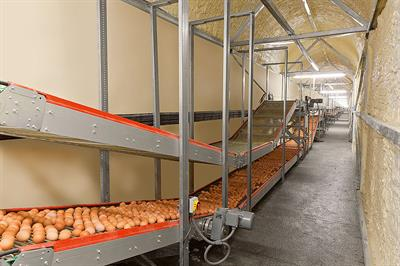 Curve Conveyors For Egg Collection Systems