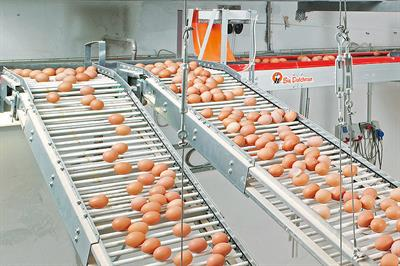 Rod Conveyors for Egg Collection