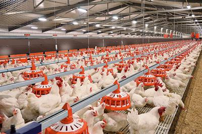 ReproMatic - Feeding System for Broiler Breeders
