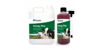 Provita - Model Energy Plus - Ewes - Nutritional Supplement