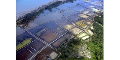 Aquaculture Services