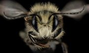 EPA and USDA to Hold Public Listening Sessions on Pollinator Strategy