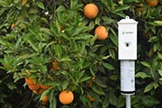 Semios Receives EPA Approval to Combat Difficult Citrus Pest
