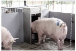 Heat Detection Feeding System
