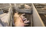 Combi-Flex - Farrowing Pen