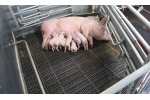 Combi-Flex - Turn Around Farrowing Pen