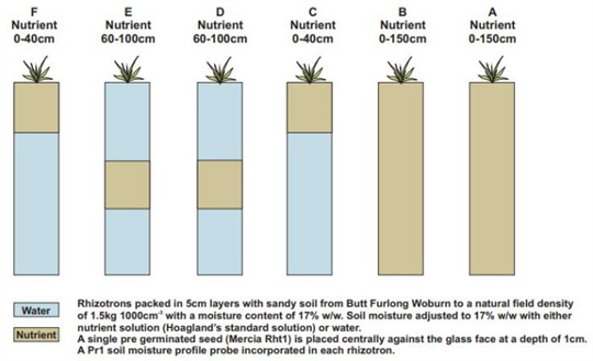 An Instrumented Rhizotron to Investigate the Root Growth In Wheat - Case Study