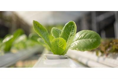 Data Collection: A Growing Trend in Hydroponics