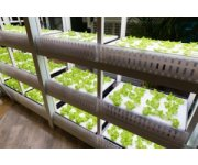 Is Vertical Farming Here to Stay?