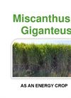 Miscanthus Energy Crop - Brochure