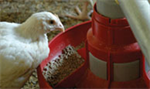 Hired-Hand - Feeder