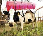 Crowcon's LaserMethane Detector helps Tesco monitor methane emissions from cows