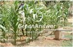 Green Answer - Model SP5K5 - Solar water pumping system for irrigation in Niger