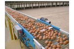 Egg Conveyor System