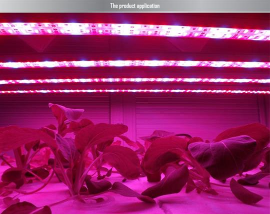 LED Lighting For Growth Chambers
