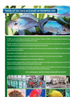 Feeds for Ornamental Fish.  Brochure