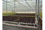Agrotech - Salad Line Systems (Table or Floating)