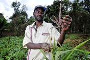 Kenya's smallholder farmers to get IFAD funding