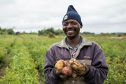 New potato varieties to boost productivity in Tanzania, Kenya could borrow some tips