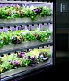 M&F - Model DH-C200 - Automatic  Environmental Control  LED Hydroponic System