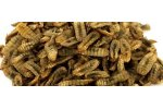 Whole Dried BSF Larvae