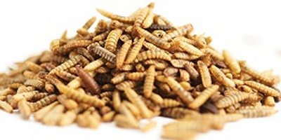 Enterra Whole Dried Larvae