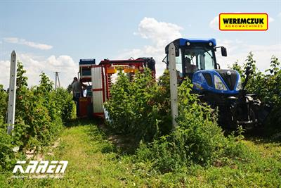 Karen harvester irreplaceable in raspberry and blueberry harvesting