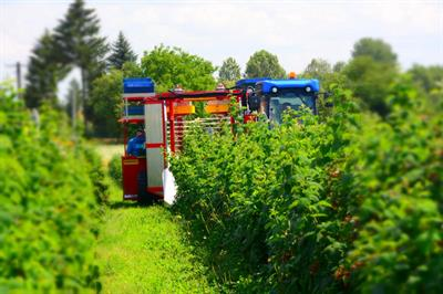 Karen - Raspberry and Blueberry Harvester