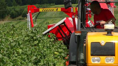 Joanna - Model 4 - Half-Row Currant and Berry Harvester