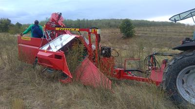 CURRANT AND BERRY HARVESTER-2