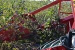 Half-Row Berry Harvester