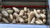Lotus Root Washing and Peeling Machine,Vegetable Brush Washing Machine