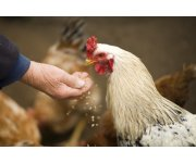 Antibiotics and the Livestock Industry